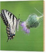 Yellow Swallow Tail 2 Wood Print