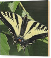 Yellow Swallow Tail Butterfly Wood Print