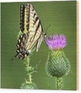 Yellow Swallow Tail Wood Print