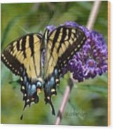 Yellow Swallowtail Butterfly Two Wood Print