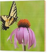 Yellow Swallowtail On Cone Flower Wood Print