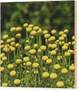 Yellow Tansy Wood Print