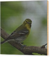 Yellow-throated Vireo On Branch Wood Print
