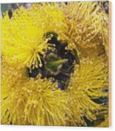 Yellow Tree Flower Wood Print