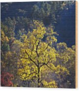Yellow Tree In Sunlight Wood Print