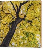 Yellow Tree Wood Print