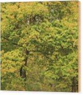 Yellow Trees In Fall Wood Print