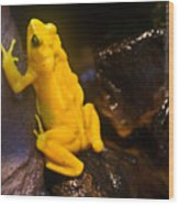 Yellow Tropical Frog Wood Print