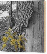 Yellow Tufts Wood Print