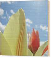 Yellow Tulip Flower Art Prints Spring Blue Sky Clouds Baslee Troutman Wood Print