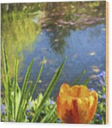 Yellow Tulip In Giverny  Wood Print