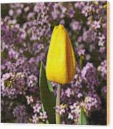 Yellow Tulip In The Garden Wood Print
