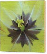 Yellow Tulip Macro Spring Floral Garden Baslee Troutman Wood Print