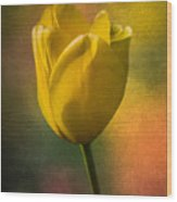 Yellow Tulip Textures Of Spring Wood Print