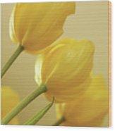 Yellow Tulip Trio Wood Print