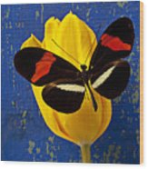 Yellow Tulip With Orange And Black Butterfly Wood Print