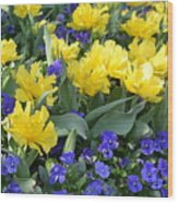 Yellow Tulips And Violets Wood Print