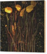 Yellow Tulips Decaying At Sunset Wood Print