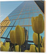Yellow Tulips Looking Up At The Hancock Boston Ma Wood Print