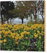 Yellow Tulips Of Fairhope Alabama Wood Print