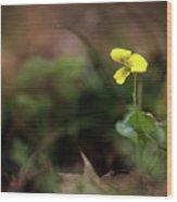 Yellow Violet Wood Print