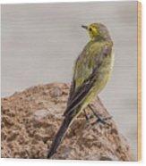 Yellow Wagtail Wood Print