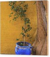 Yellow Wall, Blue Pot Wood Print
