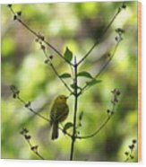 Yellow Warbler In A Tree 2 Wood Print