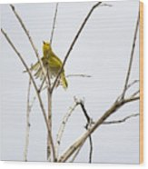 Yellow Warbler In Flight Wood Print