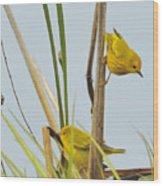 Yellow Warblers Wood Print