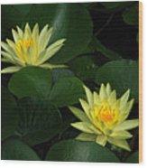 Yellow Water Lilies Wood Print