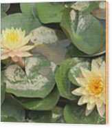 Yellow Water Lillies Wood Print