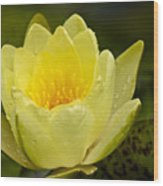 Yellow Water Lilly Wood Print