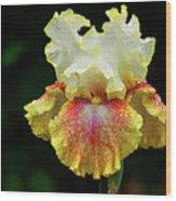 Yellow White And Burgundy Iris Wood Print