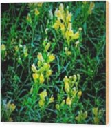 Yellow Wild Flowers In Late Summer Wood Print
