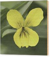 Yellow Wild Violet Wood Print