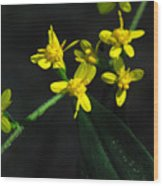 Yellow Wildflower Wood Print