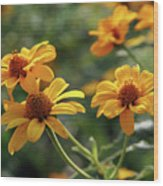 Yellow Wildflowers 3680 H_2 Wood Print