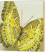 Yellow Wings In Gold Wood Print