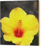 Yellow Wonder Wood Print