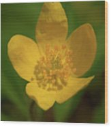 Yellow Wood Anemone 2 Wood Print