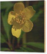 Yellow Wood Anemone 3 Wood Print