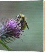 Yellowhead Bumblebee Two Wood Print