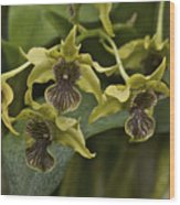 Yellowish Orchids Wood Print