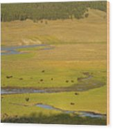 Yellowstone Bison 2 Wood Print