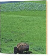 Yellowstone Bison  Wood Print