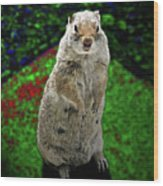 Yellowstone Pica Wood Print