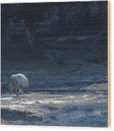 Yellowstone White Lady Unsigned Wood Print
