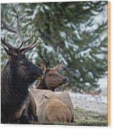 Yellowstone Wild Wood Print