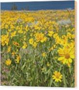 Yellowstone Wildflower Wood Print